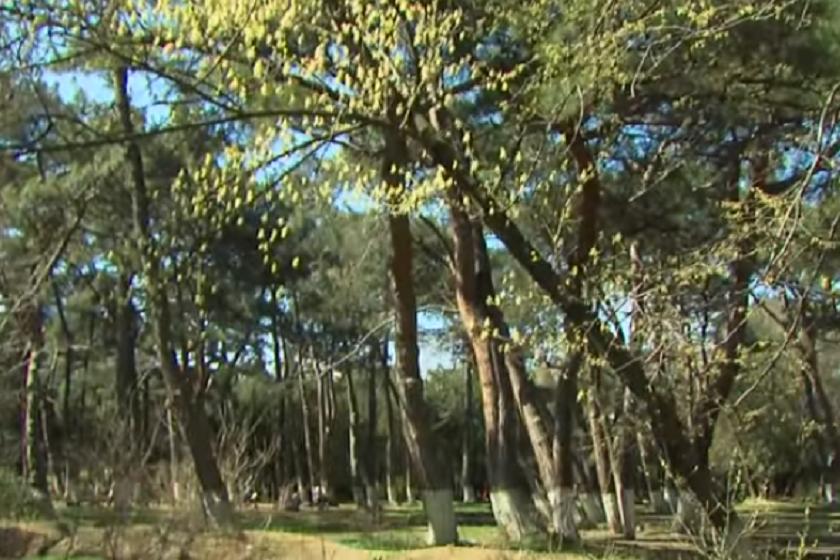 დიღმის ტყე-პარკი