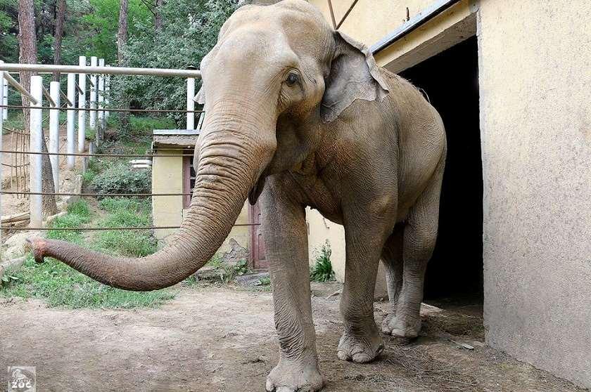 სპილო გრანდი