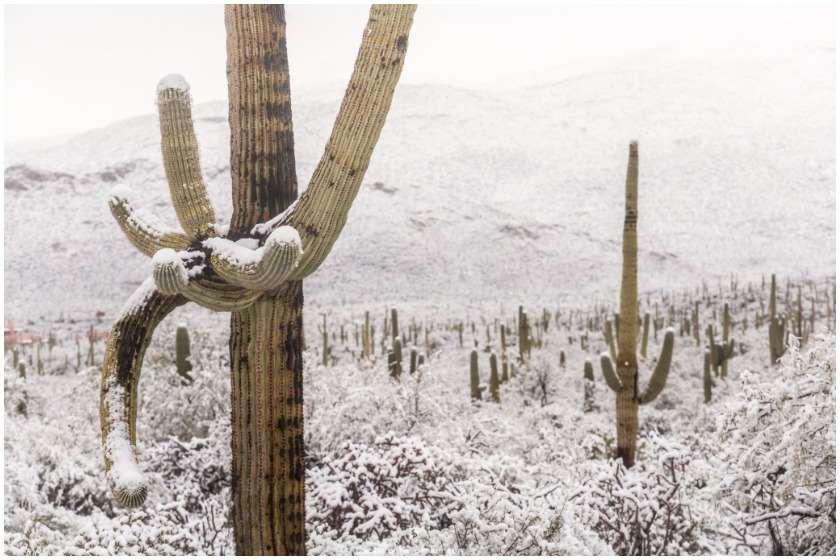თოვლი