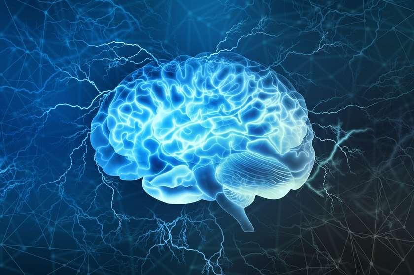 თავის ტვინი