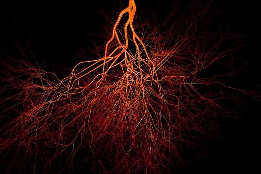 ტრანსკორტიკალური სისხლძარღვები