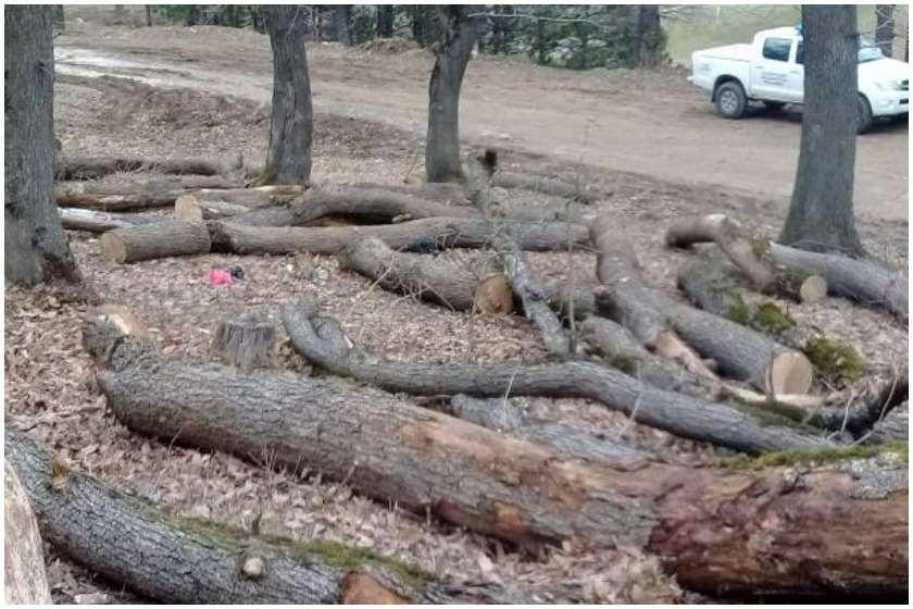 ხეების ხმობა