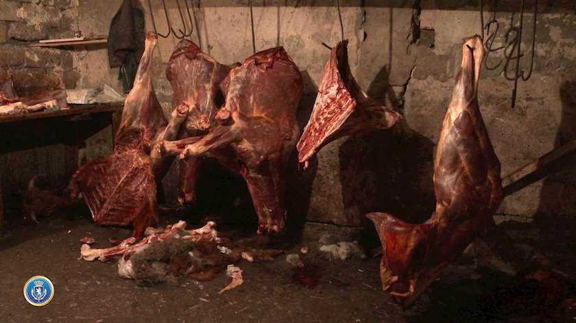 ვირის ხორცი