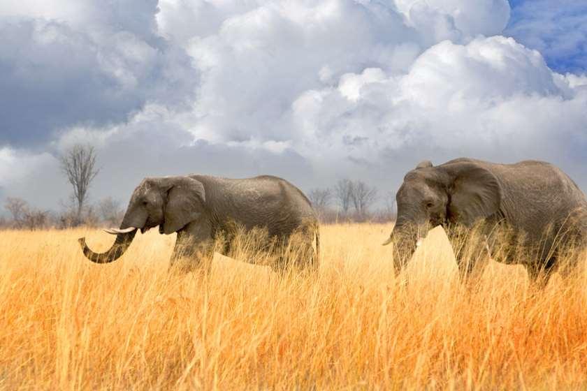 ზიმბაბვე, სპილოები