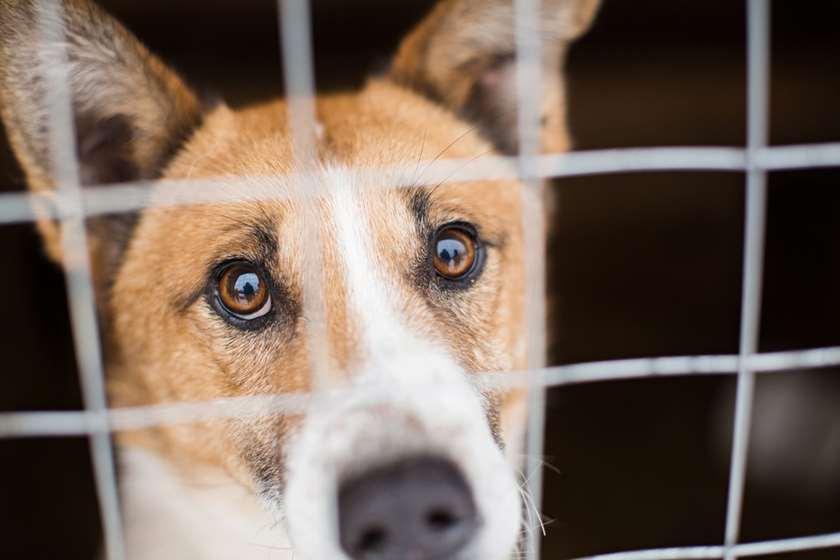 ძაღლი ცხოველთა თავშესაფარი