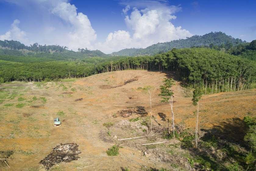ამაზონის ტყე