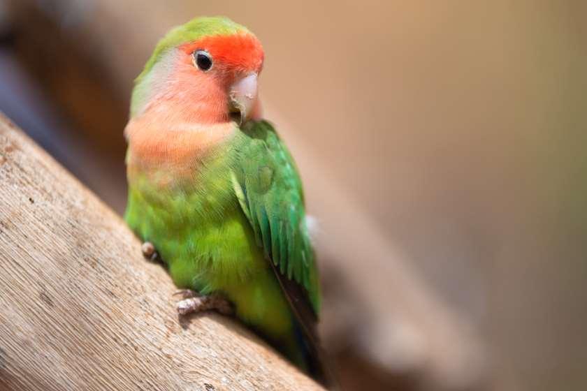 განუყრელა ჩიტი