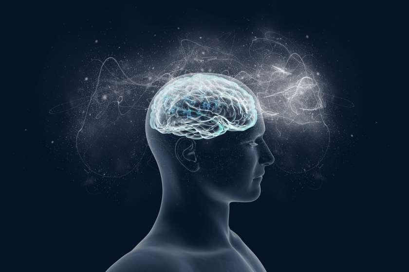 ადამიანის ტვინი