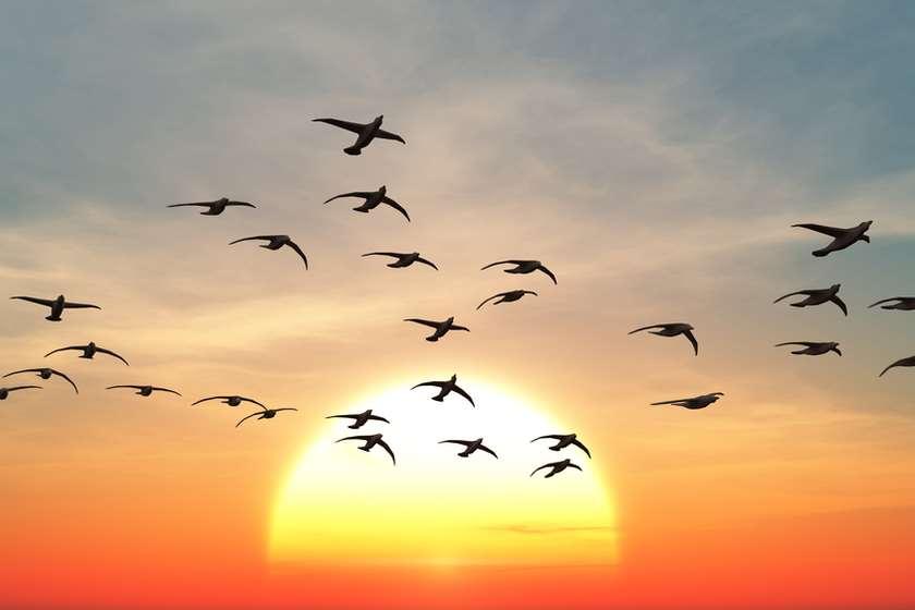 ფრინველის გრიპი
