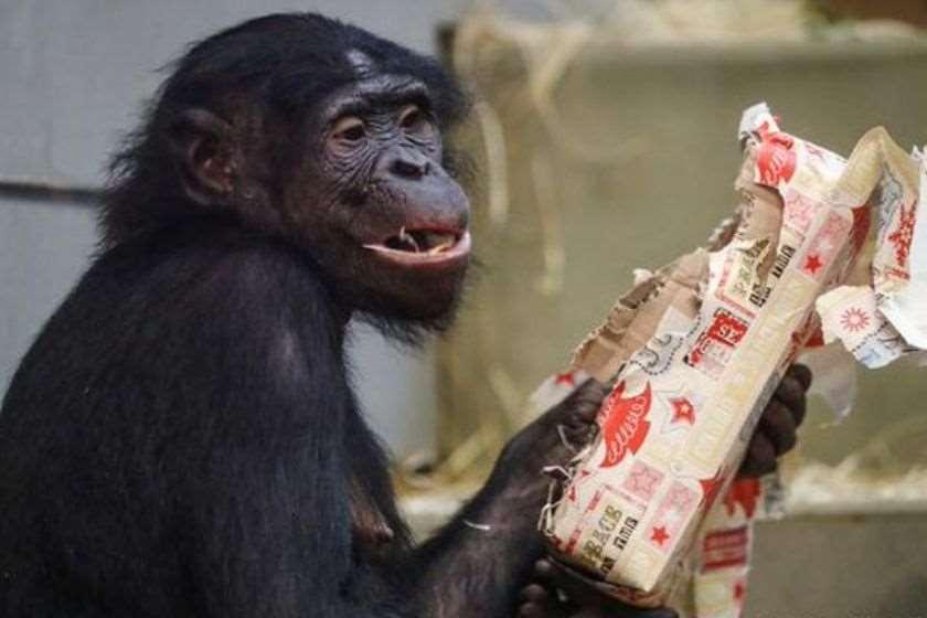 ზოოპარკი მაიმუნი საჩუქარი