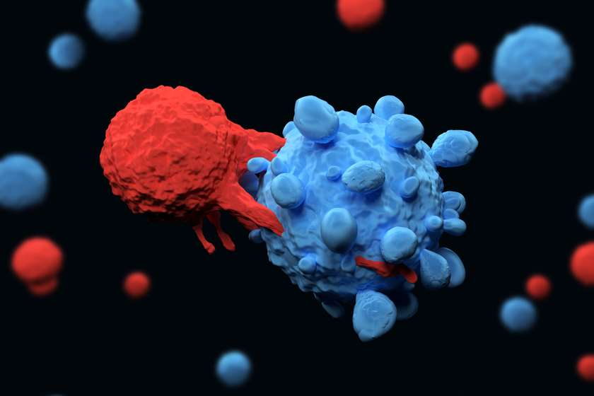 T-უჯრედი