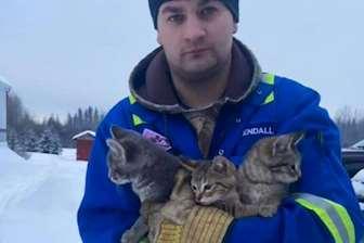 კენდალ დივიში კნუტები გადარჩენა