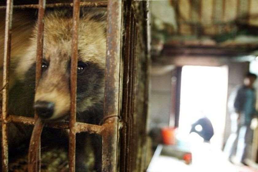 ჩინეთი გარეული ცხოველები