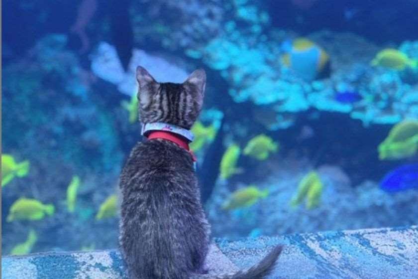 კნუტები აკვარიუმი