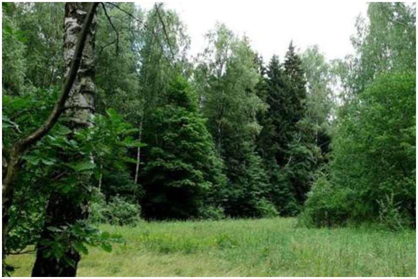 ტყეები