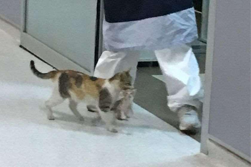 კატა კნუტი საავადმყოფო სტამბოლი