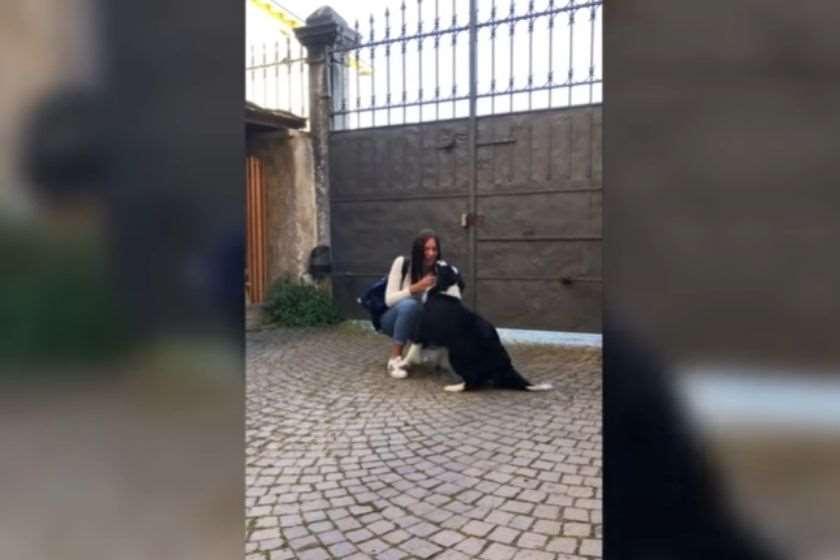 იტალია კარანტინი ძაღლი პატრონი