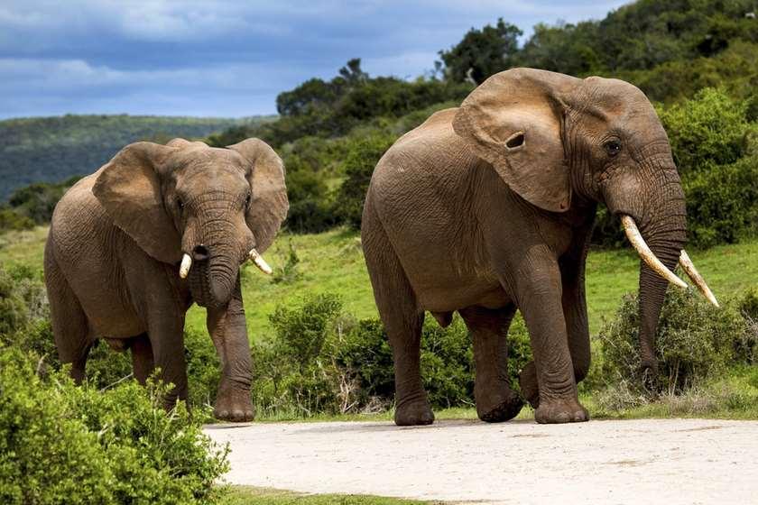 ინდოეთი სპილო ანდერძი