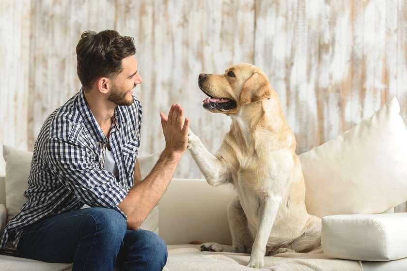ადამიანი ძაღლი ასაკი