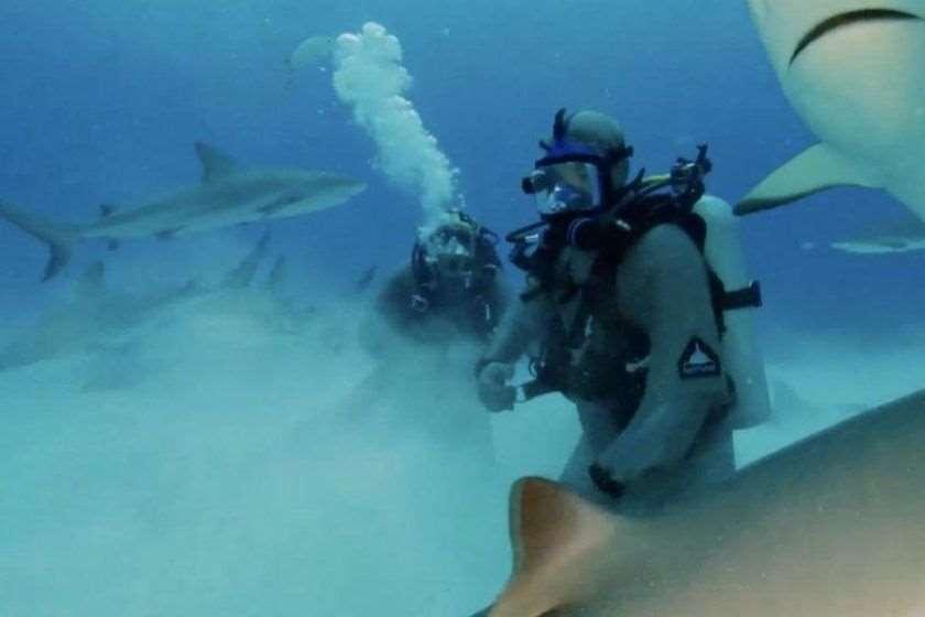 მაიკ ტაისონი ზვიგენები