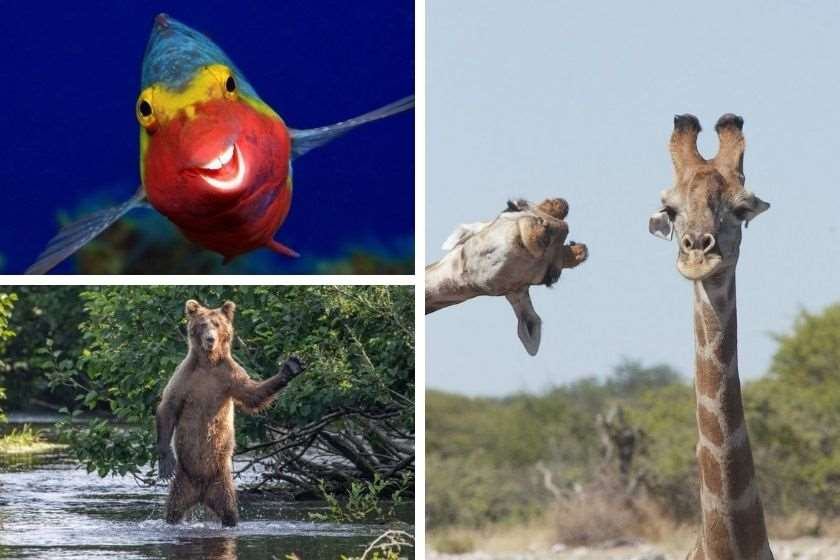 The Comedy Wildlife Photography Awards 2020