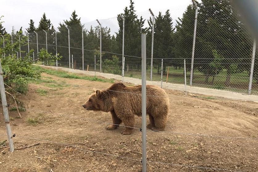 დათვი, რომელიც 13 ივნისის სტიქიის  დროს კონდიციონერზე იჯდა